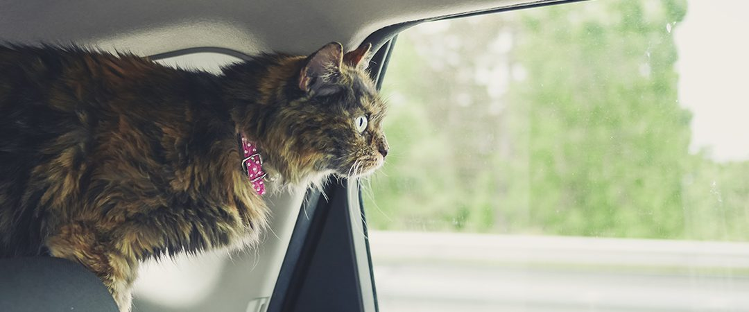 Miten kuljetat lemmikkisi autossa – vinkit ja vihjeet turvalliseen matkustukseen